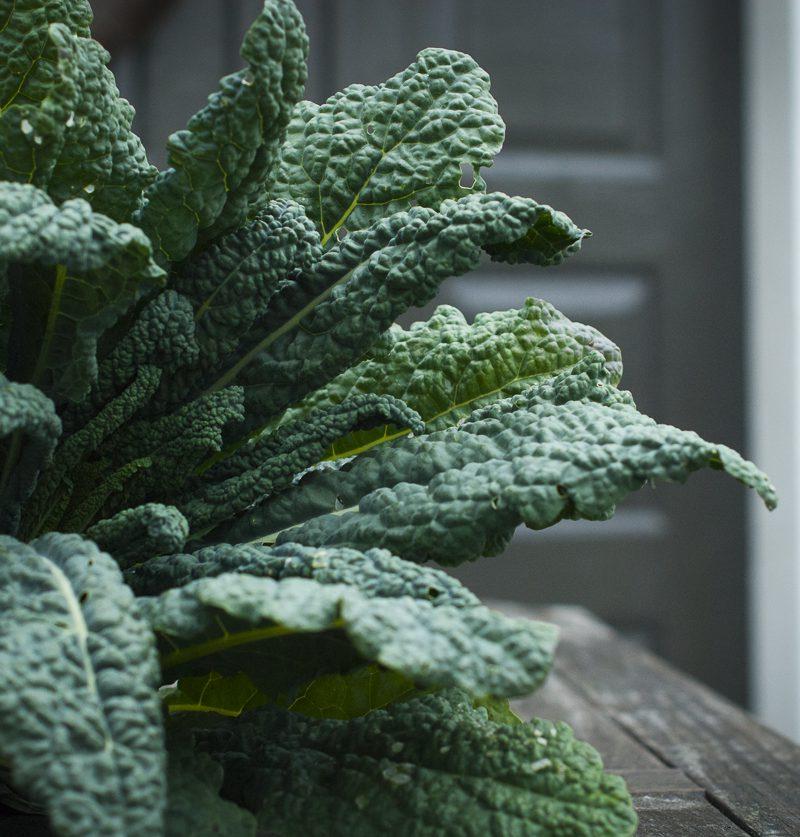 Grønnsaksplanter